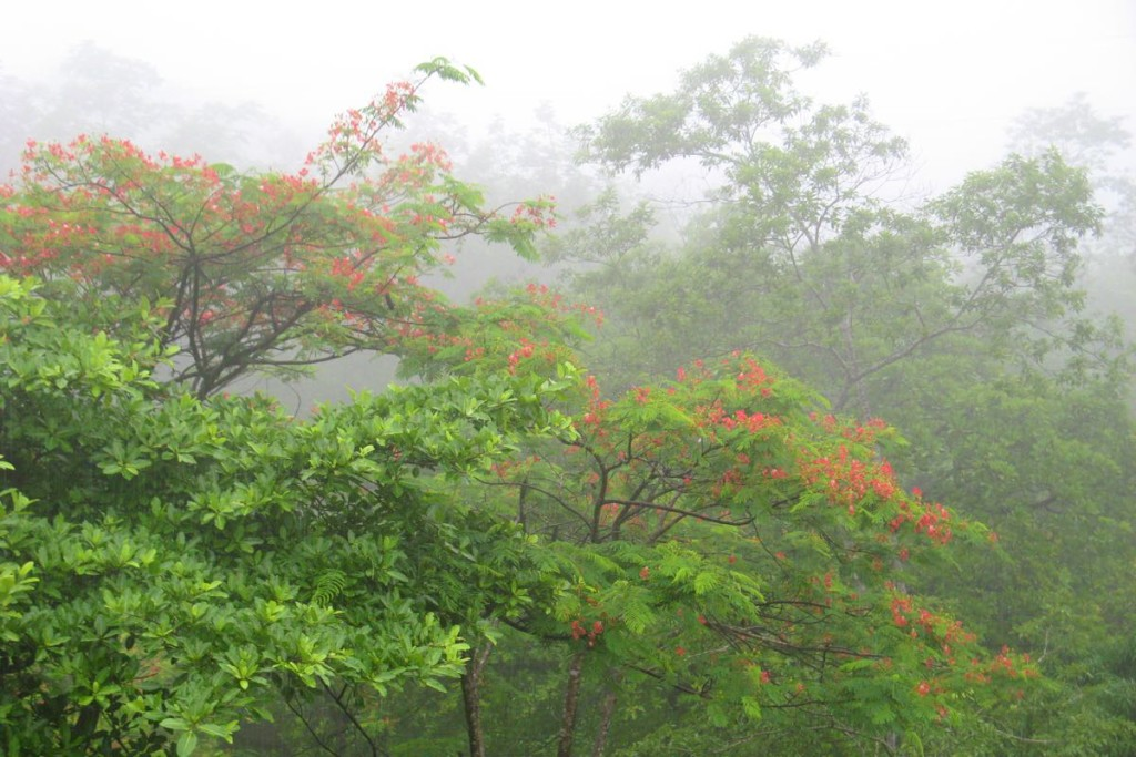 horizontes-montezuma-botanical-garden