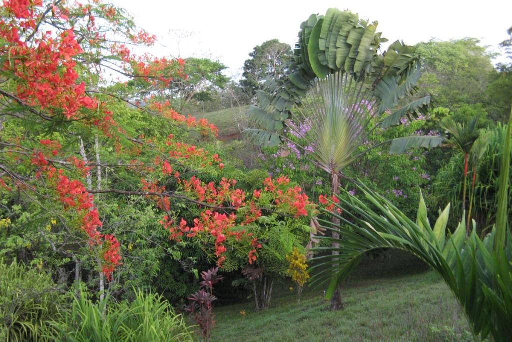 Hotel Horizontes de Montezuma botanical garden